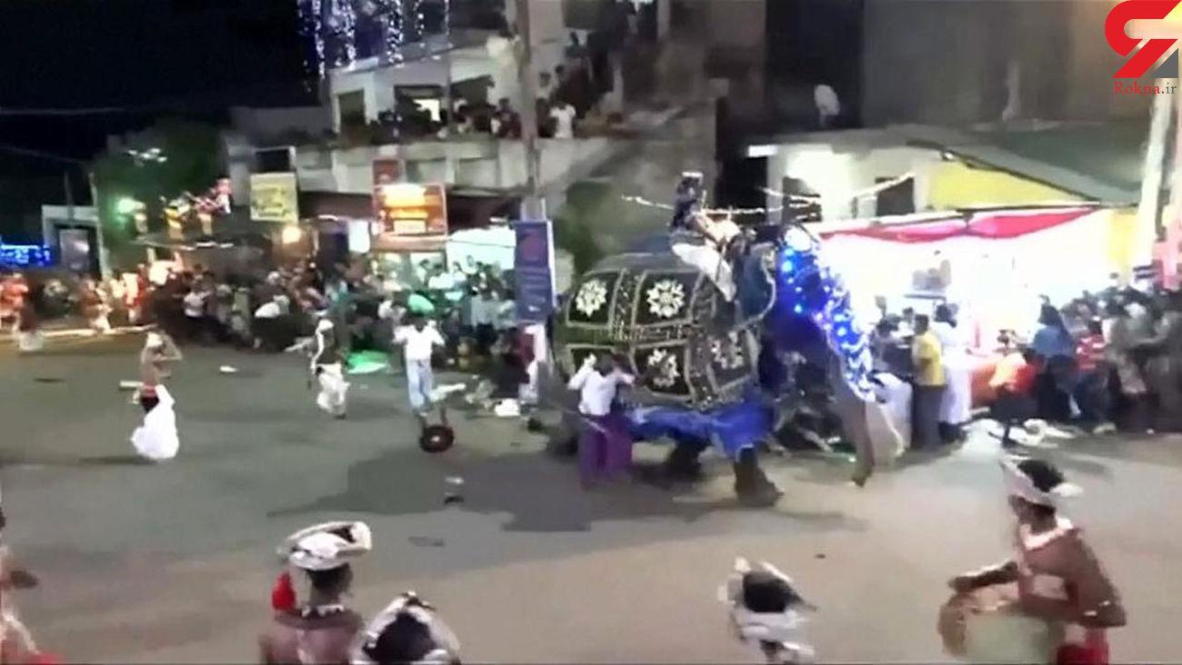 حمله فیل خشمگین به 17 میهمان یک مراسم در سریلانکا + فیلم