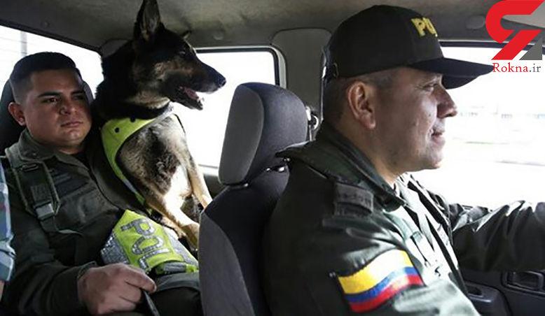 جایزه ارزشمند قاچاقچیان مرگ برای کشتن سگ پلیس مبارزه با مواد مخدر + عکس