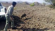 وحشت از گراز وحشی داخل یک کارگاه / در سیستان و بلوچستان رخ داد