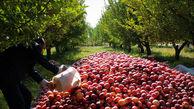 ممنوعیت صادرات سیب درختی و پرتقال لغو شد؛ ابلاغ تصمیم تازه به گمرک