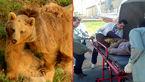 حمله خونین خرس به جوان لرستانی +عکس