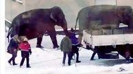 فرار فیل ها به داخل خیابان+عکس