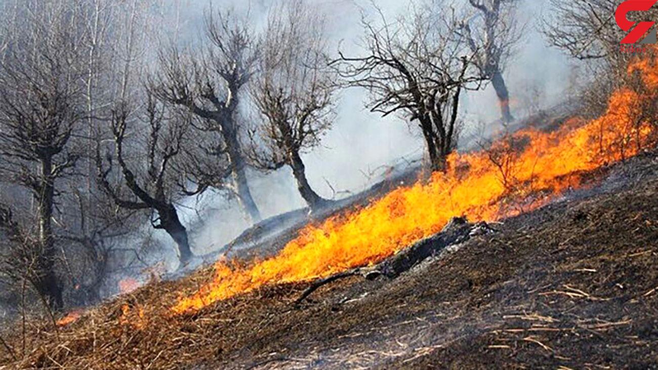 آتش به جان درختان جنگل دزفول