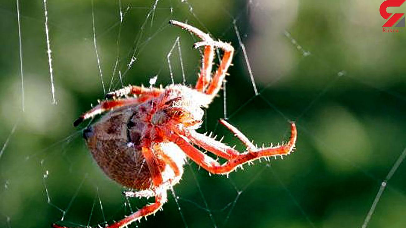 دنیای پر از شگفتی عنکبوتها