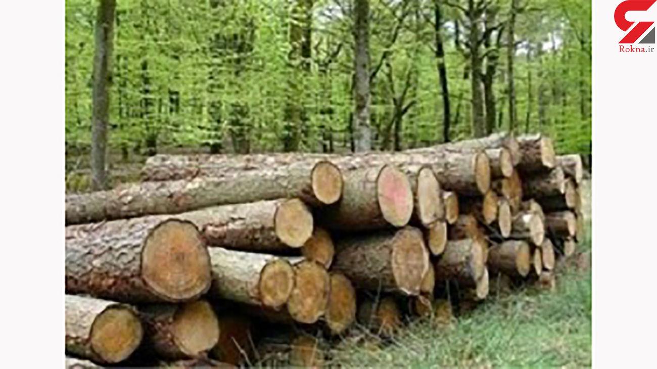 کشف 20 تن چوب قاچاق در مازندران