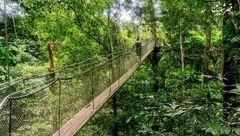 جنگلی ۱۳۰ میلیون ساله با انسانهای غارنشین/سفرهایی به عمق طبیعتی رویایی