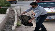 عکسی عجیب از پرسه زدن مار بازیگوش در مهاباد / مردم شوکه بودند