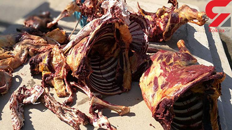 400 کیلو گوشت الاغ از یک قصابی کشف شد+ عکس