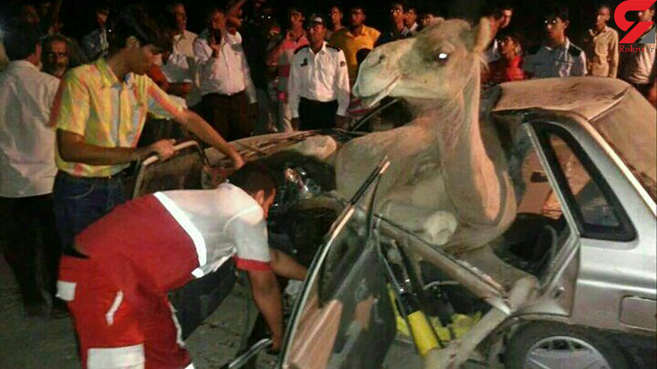 2 کشته در تصادف پراید با شتر / در سمنان رخ داد + عکس