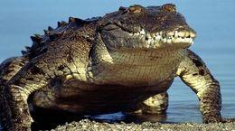 تمساح غول پیکر در این فیلم وحشت آور است! / ببینید کجاست؟!