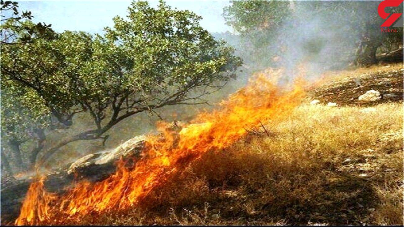 به کمک جنگل های استان سمنان بشتابید / آتش سوزی در کمین است