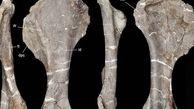 کشف فسیل 96 میلیون ساله یک دایناسور + عکس