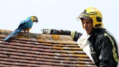 نجات یک طوطی سخنگو با جملات عاشقانه + عکس