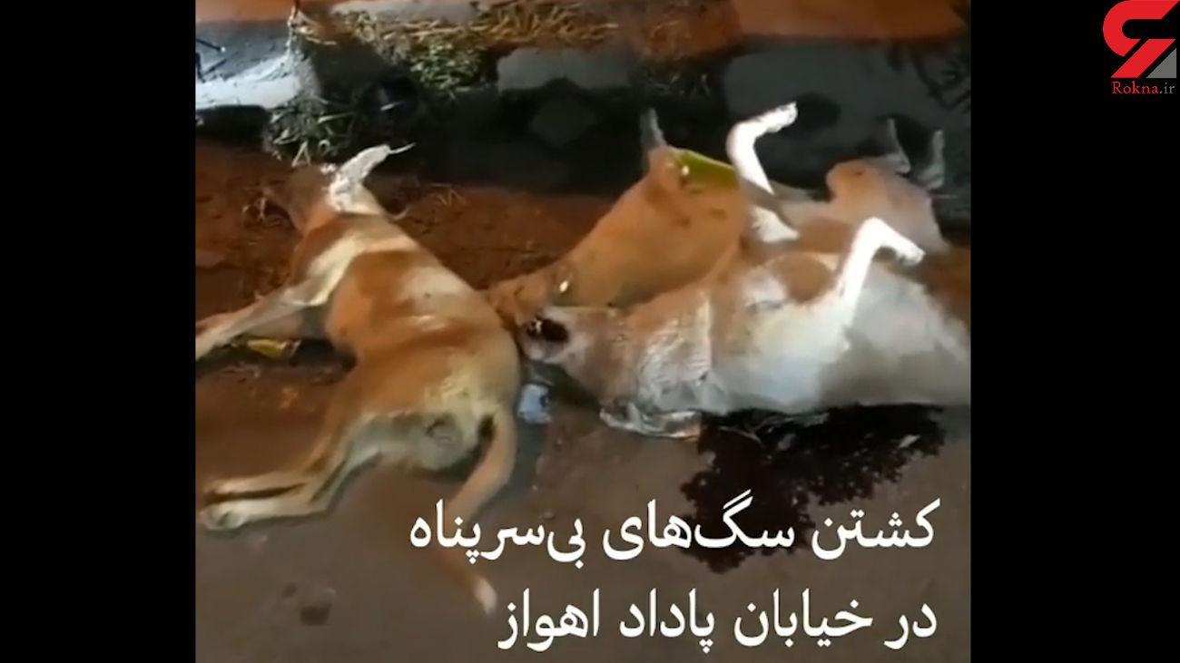 کشتن سگ های بی سرپناه در اهواز  / مقصر کیست؟! + فیلم تکاندهنده