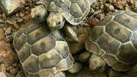 تولد لاکپشت دو سر در یزد + عکس