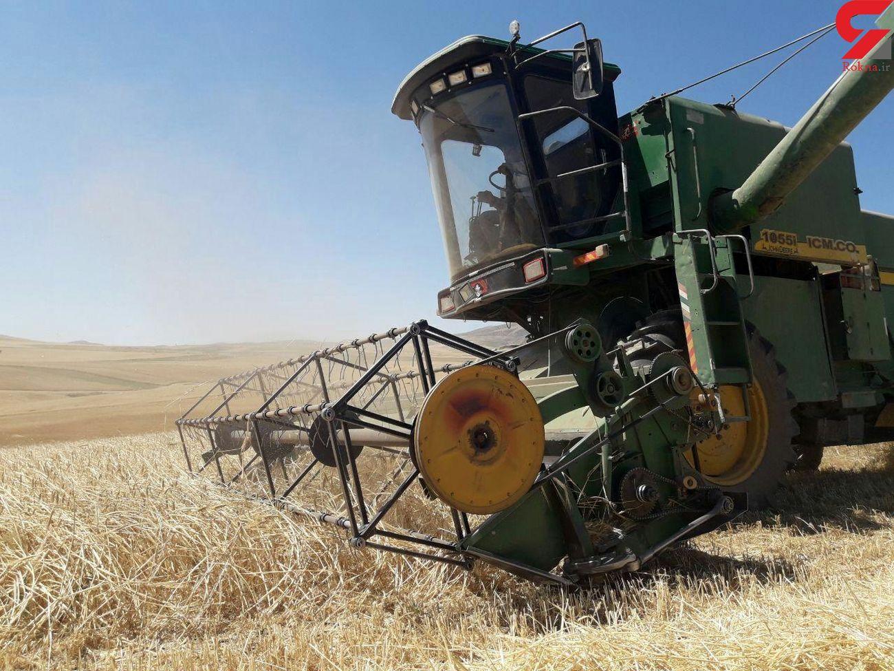 پیش بینی برداشت  ۷۰۰ هزار تن گندم از مزارع آذربایجان شرقی