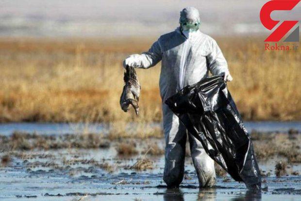 تصمیم خطرناک سازمان محیط زیست/ آنفلوانزای پرندگان تهدیدمان میکند