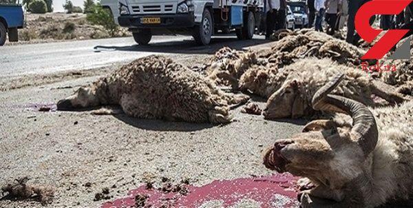 آخرین حمله خونین گرگ ها در اهر