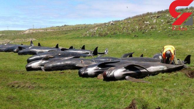 تلخ ترین عکس از ۵۱ نهنگ بعد از خودکشی + جزییات و فیلم
